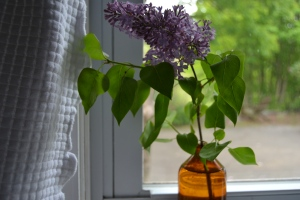 history of the lilac bush