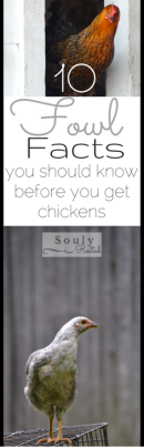 10-fowl-facts-2