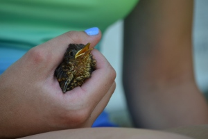 how to help a baby bird