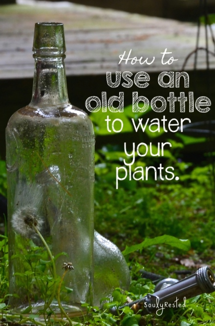 Use a bottle to water your potted plants