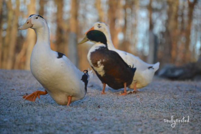 training your dog to be bird friendly
