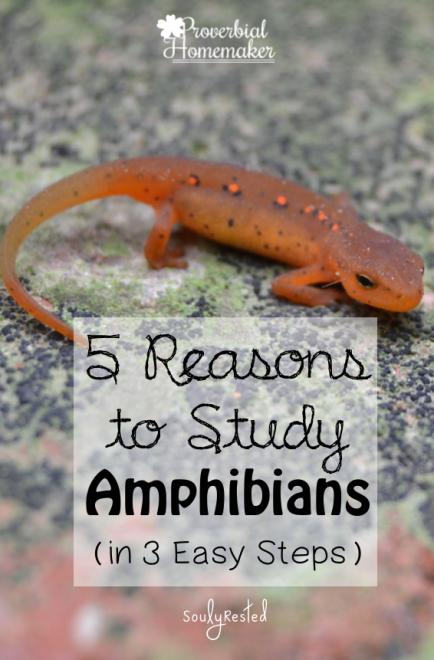 Study-Amphibians