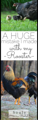 rooster-mistake