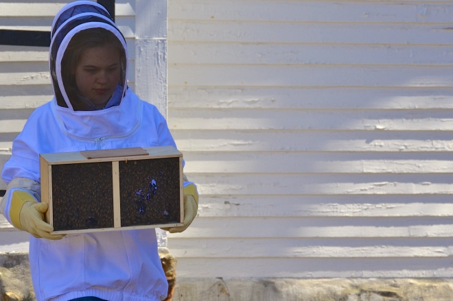 trying your hand at beekeeping
