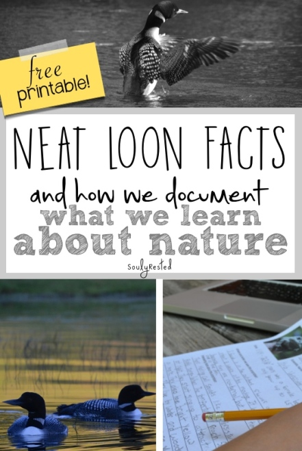 Our Backyard Book page about loons
