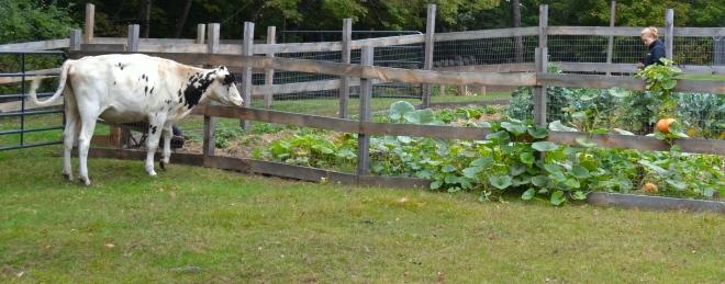 our autumn gardens